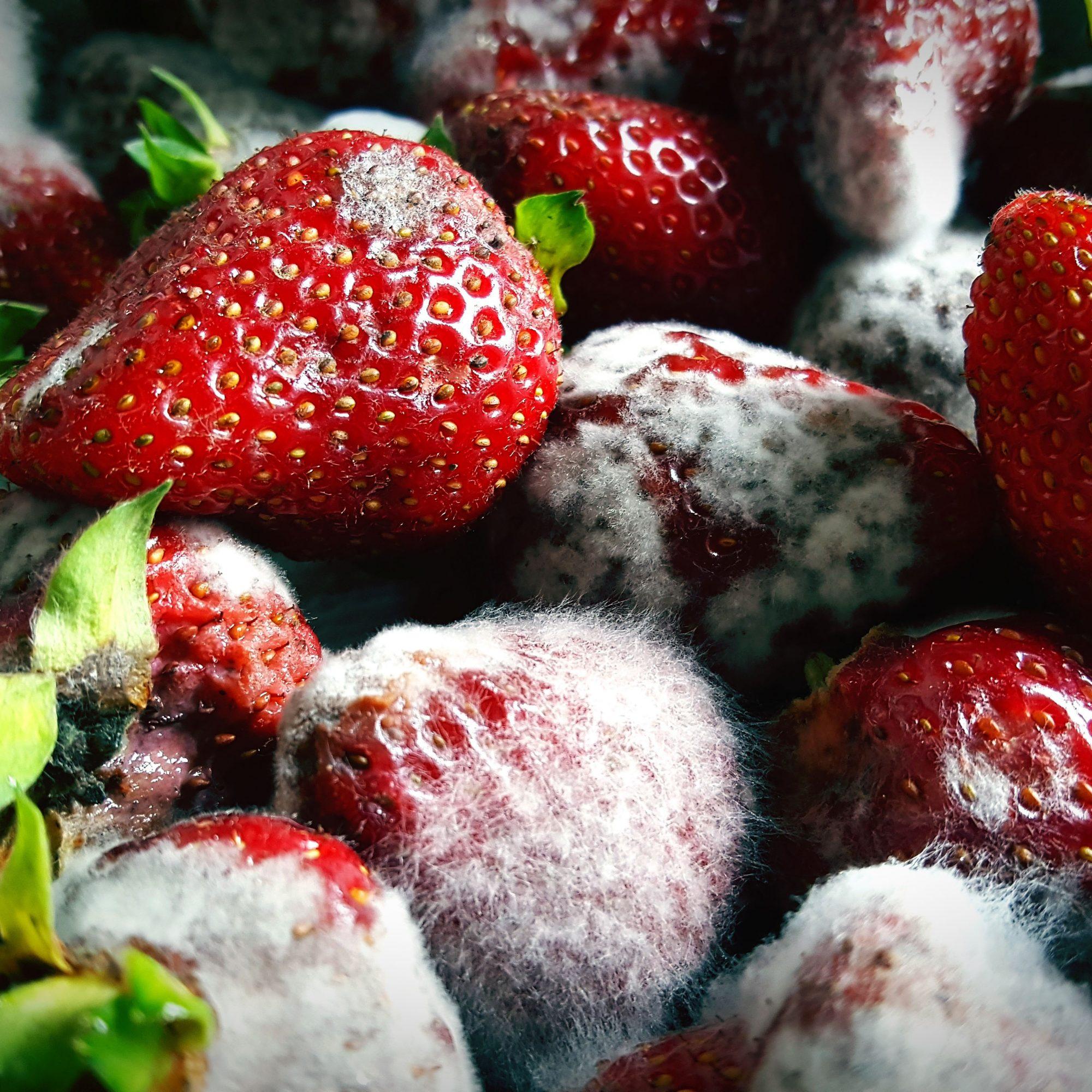 غذای فاسد یکی از علل بوی بد یخچال